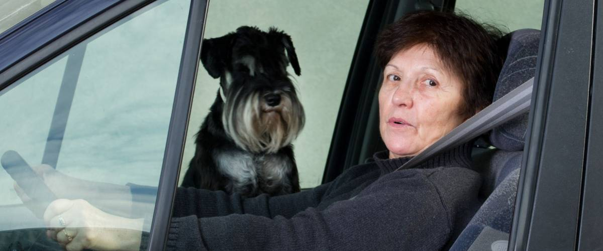 Woman drives car and dog sitting on passenger seat