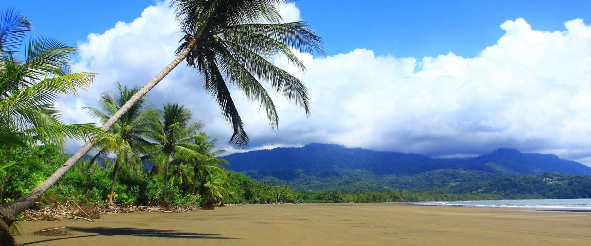 Untouched tropical beach with coconut palm, on the Pacific coast,Uvita, Costa Rica, Central America