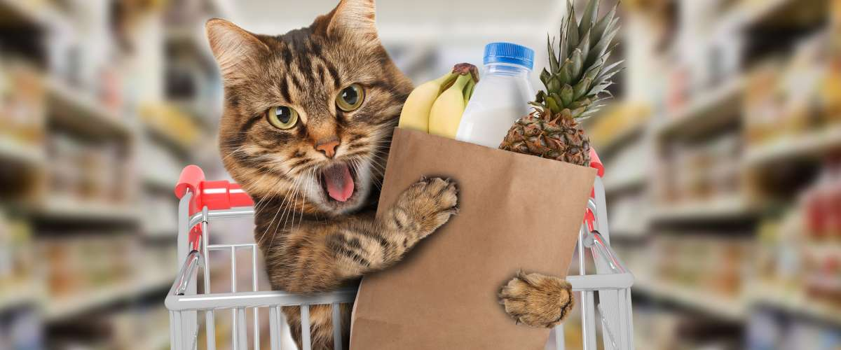 funny cat in grocery store with groceries