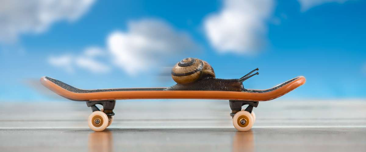 snail on a skateboard