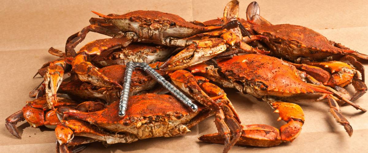 Six  steamed, seasoned, male jumbo Chesapeake Bay blue claw crabs with a steel cracker  on a brown paper table covering