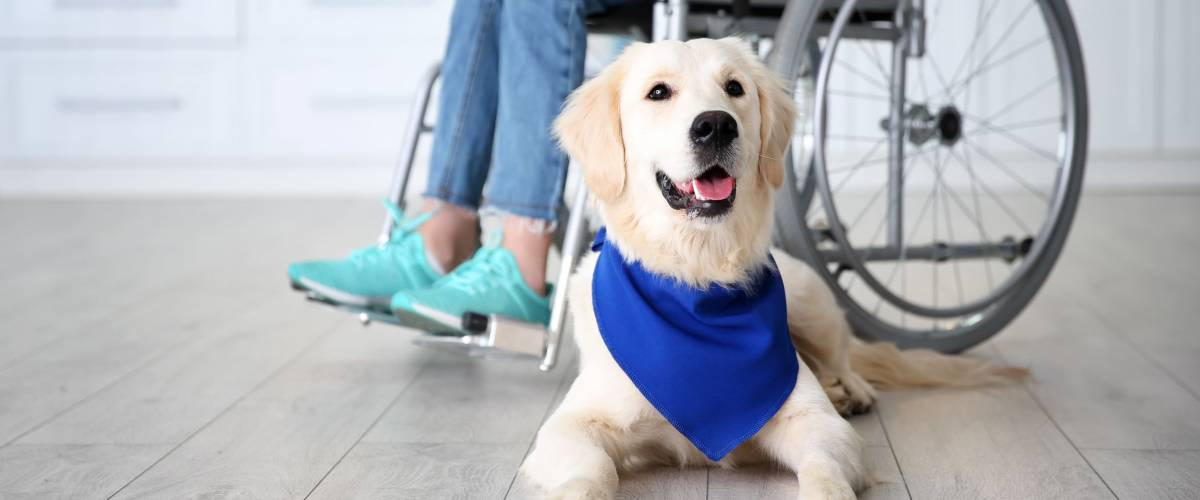 Your HSA savings can be used to cover things like service animal care
