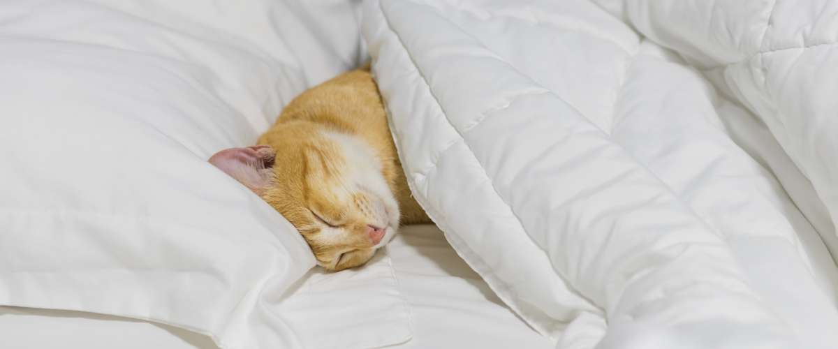 cute yellow cat sleeping on white cozy bed