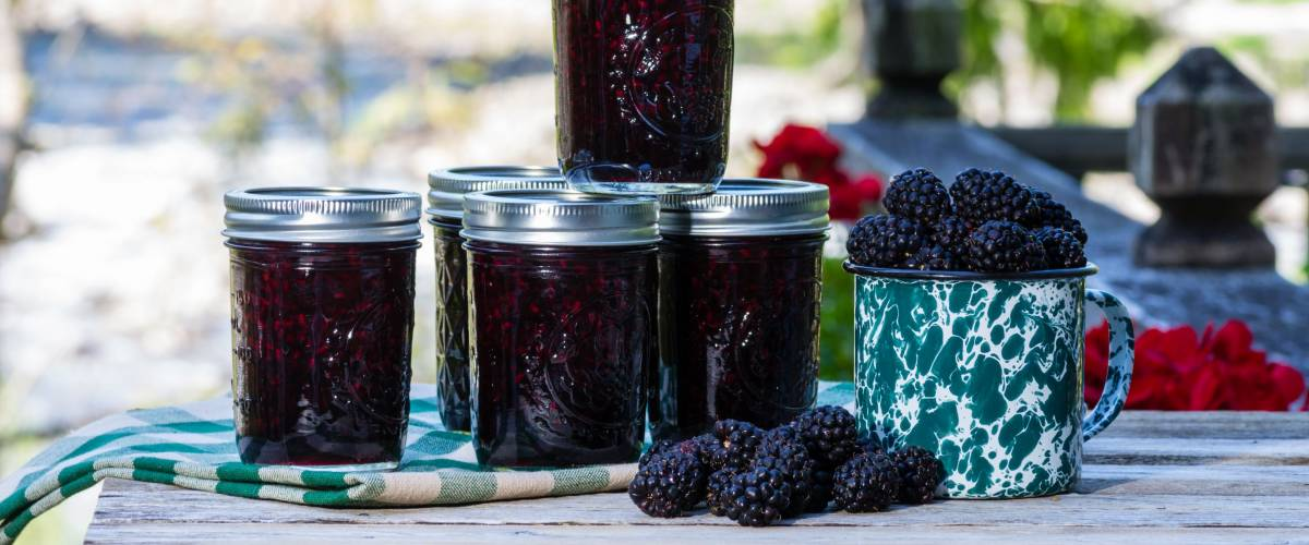 Jars of homemade marionberry preserves