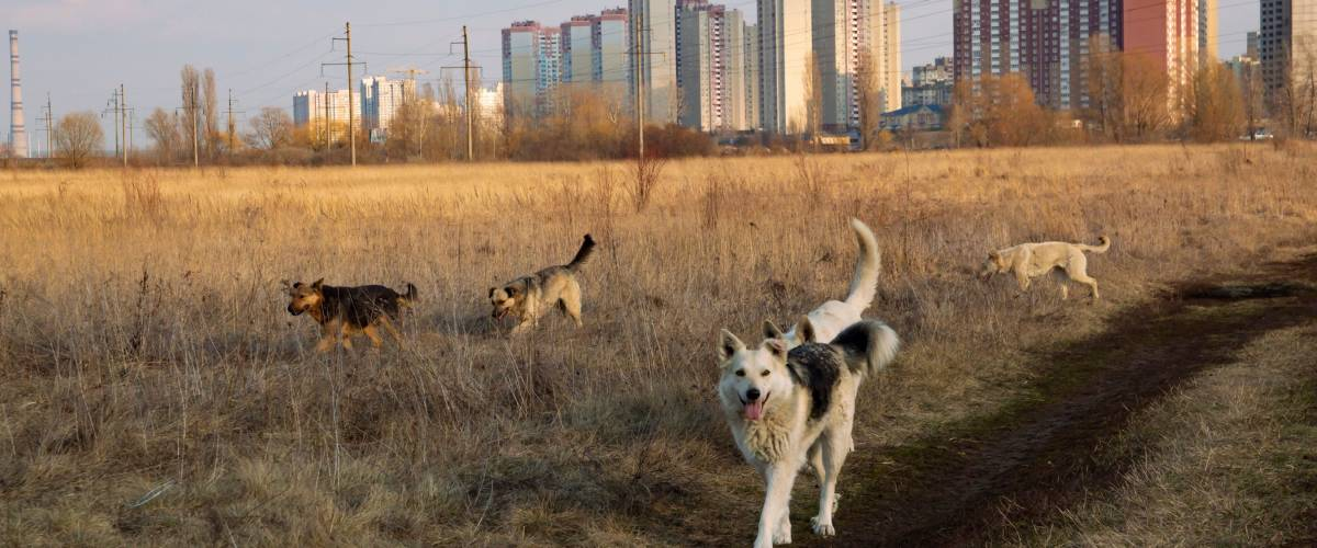 A pack of homeless dogs on the background of the city on the horizon on a sunny day