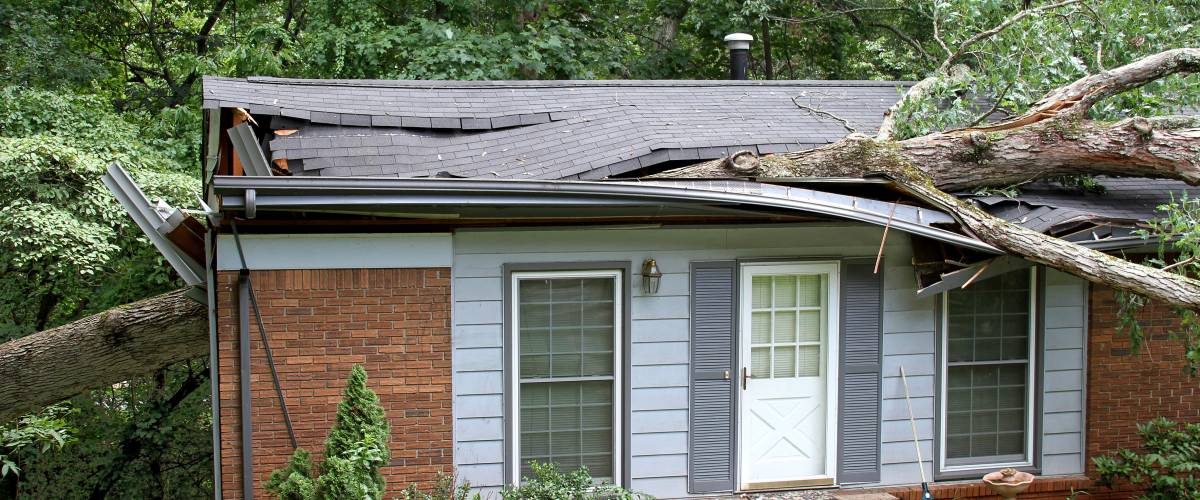 House with a downed tree through the roof