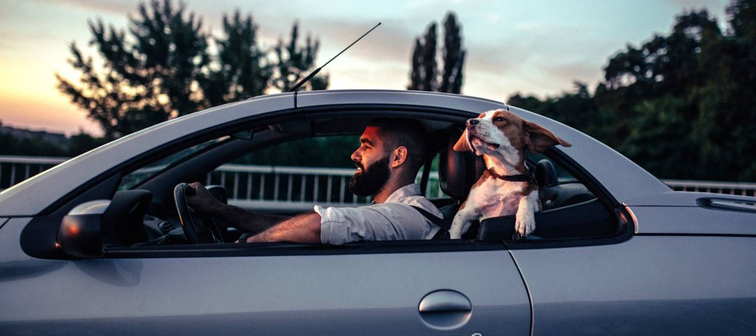 Bearded man driving compact car, with his dog's head sticking out the window behind him